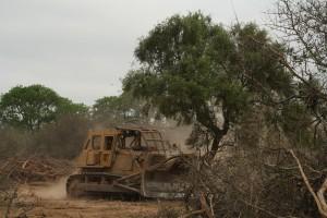 Solicitarán la recomposición ambiental de un campo ( de 10 mil ha.) desmontado en el norte salteño