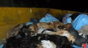 Suspenden actividades por matanza de perros con insecticida