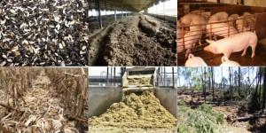 Jornada sobre aplicación de energía derivada de la biomasa