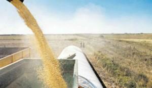 Agricultura: Buenos rindes pero resultado afectado por aumentos de costos