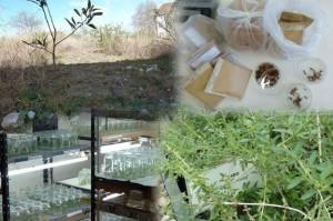 Con biotecnología vegetal reproducen especies autóctonas
