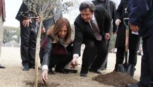 Medio Oriente: Un olivo y una oración por la paz desde Córdoba