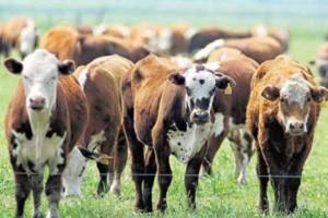 """La CRA calificó de """"innecesarias"""" a las modificaciones del sistema de trazabilidad animal"""