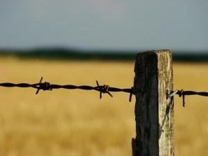 campo argentino alambre