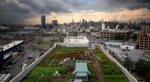 Avanza debate sobre proyecto de cubiertas verdes en edificaciones