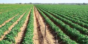 La agricultura se torna inviable en los campos del noroeste argentino