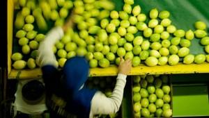 Actualizaron el sistema para tránsito de productos de origen vegetal