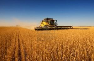 Entidad ruralista advirtió que la siembra de trigo cae en picada