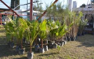 """Con la campaña """"Plantar árboles es dejar huella"""", la Unicameral se sumó al Día del Árbol"""
