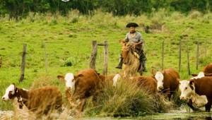Financian desarrollo biotecnológico para fortalecer la producción bovina