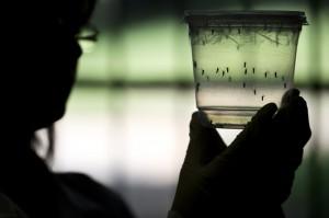 """La OMS establece una """"Unidad de Respuesta Global"""" contra el Zika"""