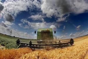 campaña agricola trigo