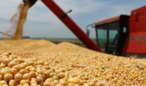 i9732-semillas-de-soja