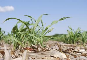 agricultura suelo