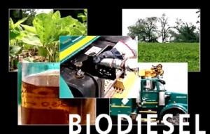 Prevén exportar biodiesel por 1,5 M de toneladas a la UE
