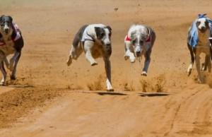 Impulsan la prohibición de la carrera de galgos en la provincia