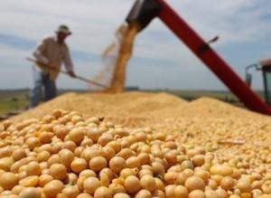 Semillas: Los cambios no llegan y peligra la normal comercialización de soja 2016/17