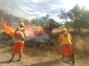 Banco Nación brindará ayuda crediticia a los productores agropecuarios afectados por los incendios