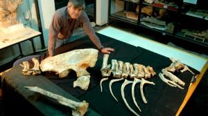 Investigadores del Conicet fueron distinguidos en un ranking de publicaciones paleontológicas