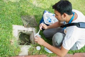 Monitoreo: Detectan gran presencia de larvas, pero no hay nuevos casos de dengue