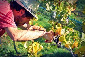 Chubut presentará su Ruta del Vino en Expo Delicatessen & Vinos