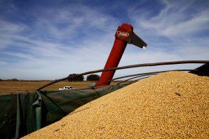 Se podrá exportar granos por cuenta de terceros