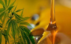 Cobertura universal: Más de 20 laboratorios públicos fabricarán aceite de cannabis y medicamentos