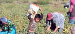 Provincias del NOA debatieron en Salta sobre trabajo infantil