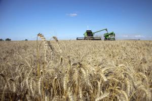 Las ventas de trigo al sector exportador aumentaron un 281 por ciento