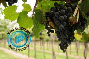 Múltiples actividades para celebrar el Día Nacional del Vino Argentino
