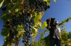 Reforma tributaria: Salta se opone a la suba de impuestos al vino impulsada por Nación