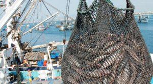 El sector pesquero finalizó 2017 con exportaciones récord:  1.978 millones de dólares
