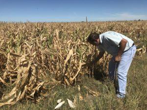 Podría llegar hasta USD 2.800 millones la pérdida por la sequía