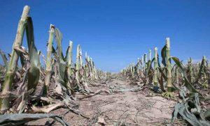 Fuerte impacto de la sequía que desafía las expectativas de productores