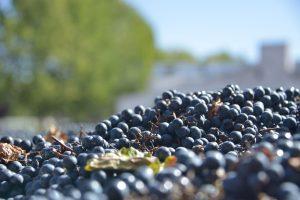 Alimentos con valor agregado incrementan sus exportaciones