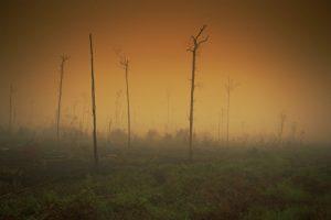 Demuestran que es posible evitar una catástrofe climática si los gobiernos actúan en forma urgente