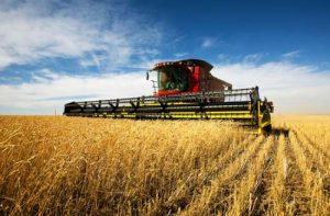Según sondeo de CREA, crecen los contrastes en el agro argentino