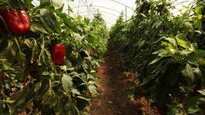 Más de 3,6 millones de hectáreas dedicadas a la producción ecológica