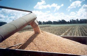 Se lanza el Monitor de Precios de Mercados Agropecuarios