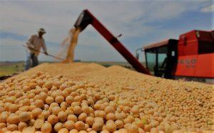 La molienda de soja continúa a buen ritmo