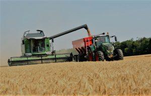 La cartera de Agricultura proyecta 21 millones de toneladas de trigo