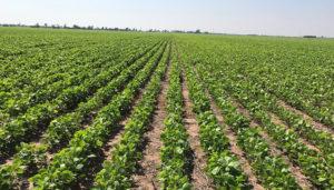 Con el SISA, hay un incremento del 157,73% en la superficie declarada y un aumento del 463,1% de los agricultores declarantes