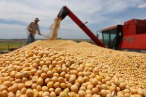 Récord de la molienda de soja en octubre