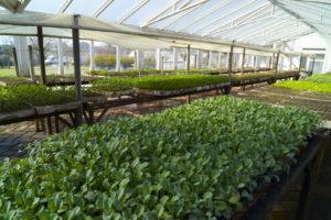 Nueva convocatoria de «Alianzas Productivas» en el sector agroindustrial
