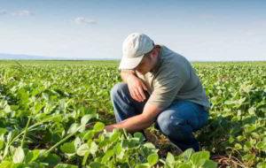 Profesionales de la agronomía exceptuados del aislamiento social, preventivo y obligatorio