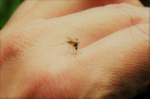 En Córdoba, se registraron 252 casos de dengue (198 autóctonos y 54 importados)