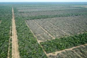 Greenpeace denunció que se desmontaron más de 6.500 hectáreas durante la cuarentena