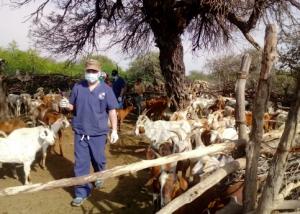 Proyecto UCASAL: criadores de cabras recibirán financiamiento para mejorar su productividad