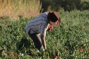 Se destinan más de $32 millones en proyectos para el sector hortícola agroecológico bonaerense