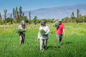 Se presentó el protocolo Covid-19 para el Turismo Rural